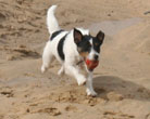 Dog Friendly Beach Cornwall