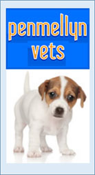 Dog Friendly Cornwall Penmellyn Vets